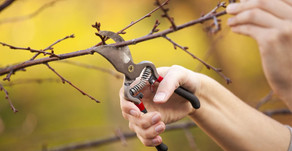 Yes, you should still prune your trees in the winter!