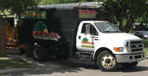 4 Tips to Identify the Best Tree Service in San Antonio