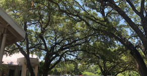DON'T BELIEVE THESE MYTHS ABOUT TREE PRUNING