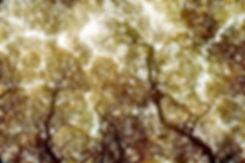 crown-cover.jpg
