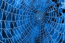 [Header image: Spider web covered with dew on a blue background. Credit: Aleksey Sagitov on https://www.123rf.com/photo_16658716_cobweb-with-dew-drops-on-a-blue-background.html?vti=nrtzzjfq8wft15tuhp-1-50]