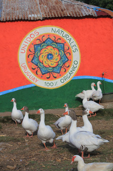 Wandgemälde Uruguay