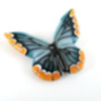 butterfly_acar.jpeg