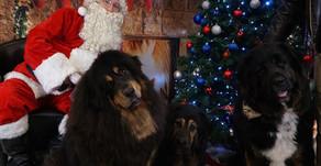 PET PICS WITH SANTA | Proceeds to Humane Haven Animal Shelter Bolingbrook