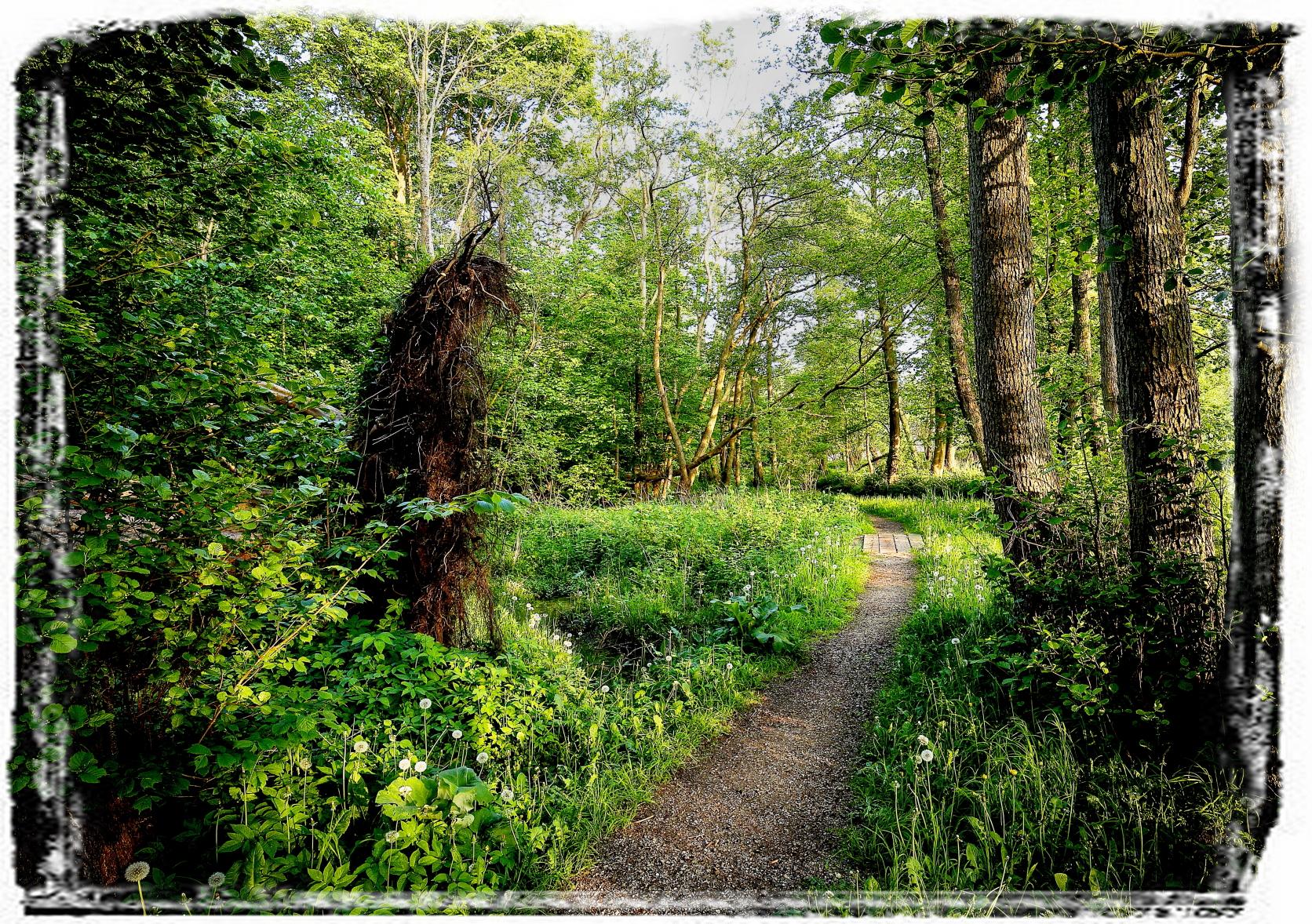 Skov ved Tadre Mølle