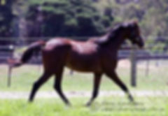 Penmain Riding Ponies