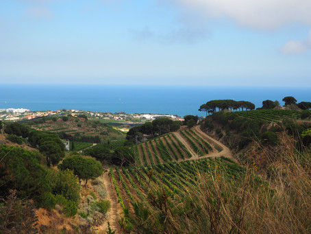 Winery Tour Barcelona: An exclusive taste of Spanish gastronomy