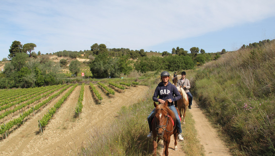 Horse Riding Wine Tour