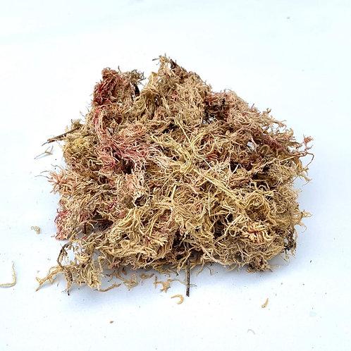 Musgo Sphagnum
