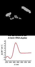 RNA Sugar puckering and CD.png