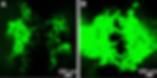Screen Shot 2020-05-06 at 3.41.04 PM.png