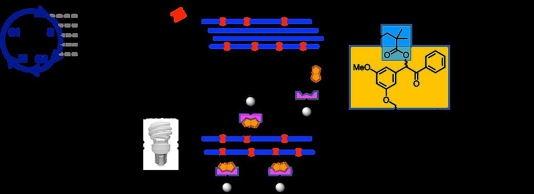 Ozlem paper_Figure 1A_version 4_website_