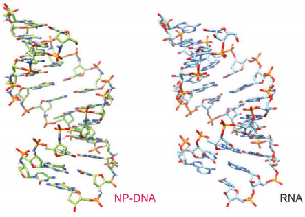 NP-DNA vs RNA crystal structures.png