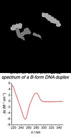 DNA Sugar puckering and CD.png