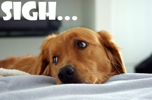 sad dog face.jpg