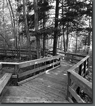 TPA Design group practices sustainable design principles such as wetland boardwalks