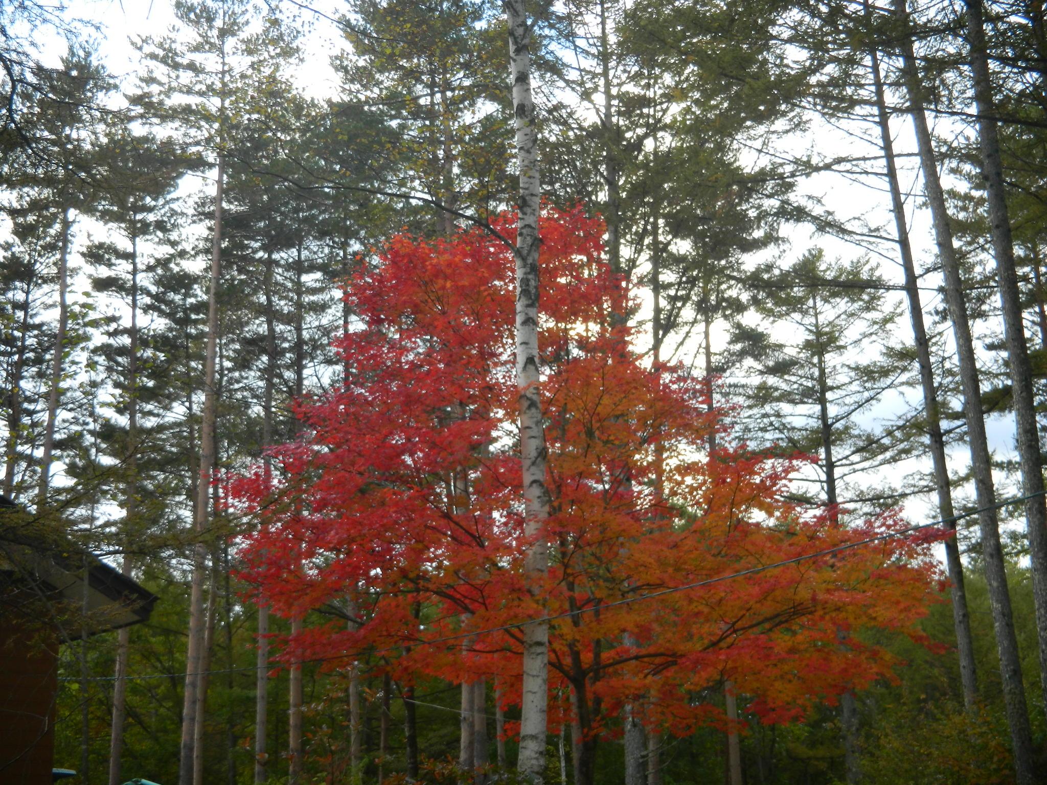 秋のお泊りツー