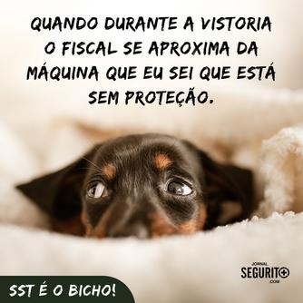 SST É O BICHO!