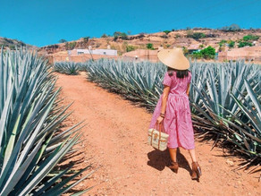 Best Things to Do in Mexico's Tequila Country.