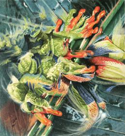 """Saturday swamp fever""."