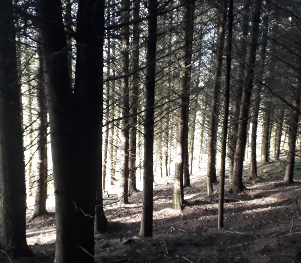 Mid-day Sun on  forest path.jpg