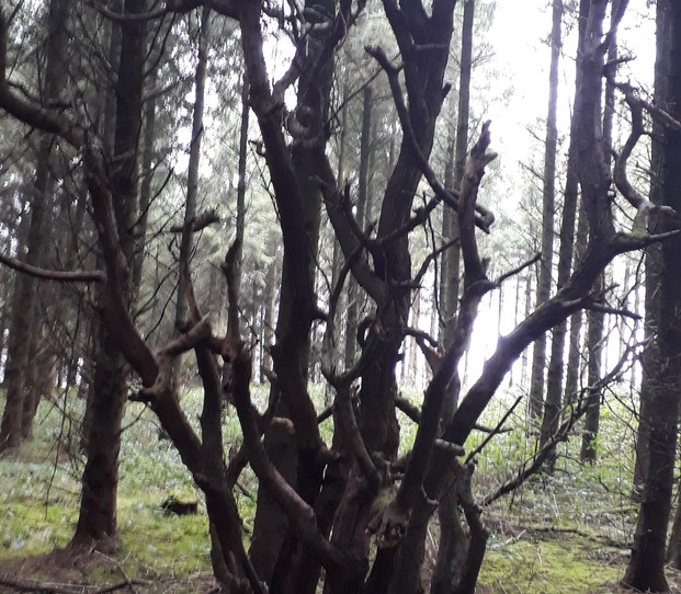 The Witch Tree.jpg