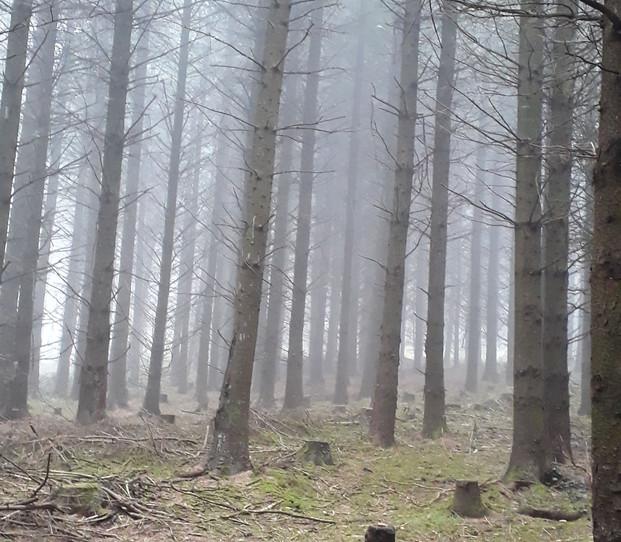 LK foggy morning.jpg