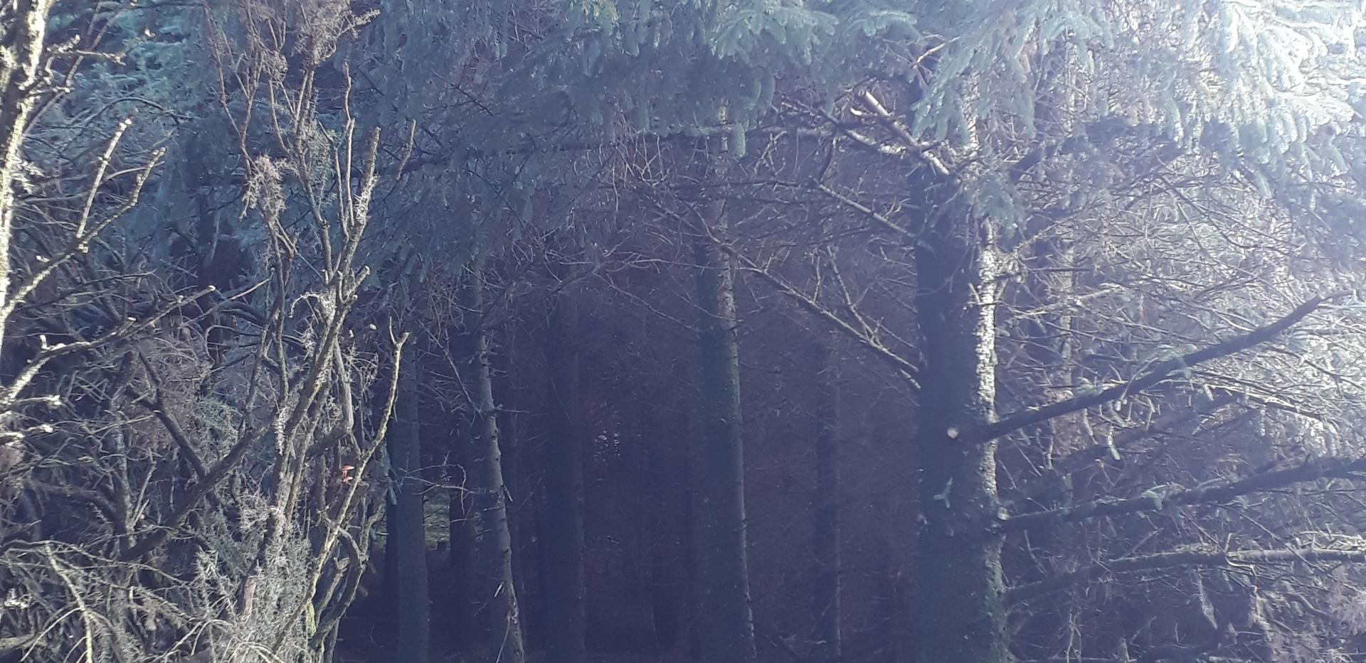 Entrance For Hobbits.jpg