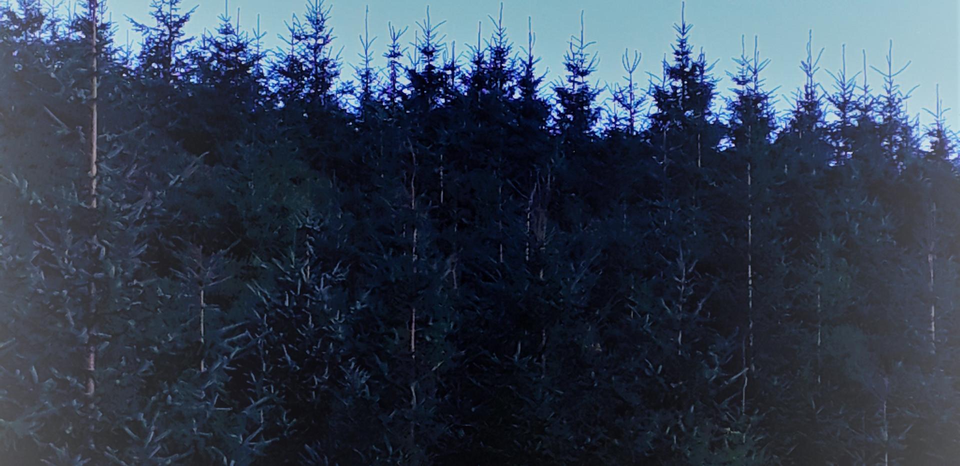 Moon at 2, Jan 24th.