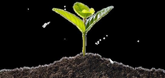 土と芽.png