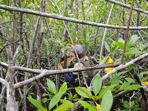 Monitore manglares PN Manuel Antonio
