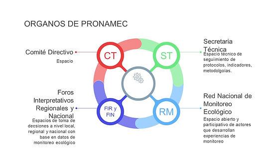 ORGANOS DE PRONAMEC-info (3).jpg