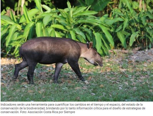 Costa Rica crea herramientas para diagnosticar el estado de salud de su biodiversidad