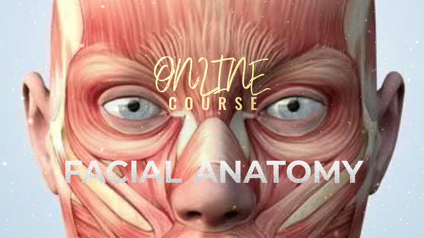 FACIAL ANATOMY TRAINING