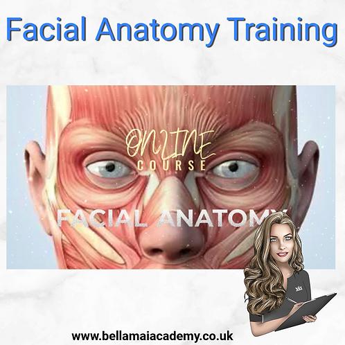 Facial Anatomy Training