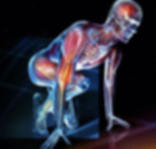 VTCT Level 3 Anatomy & Physiology Training in Essex
