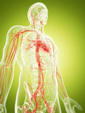 VTCT Level 3 Anatomy & Physiology Training Course Essex