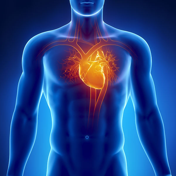 heart for heart ultrasound