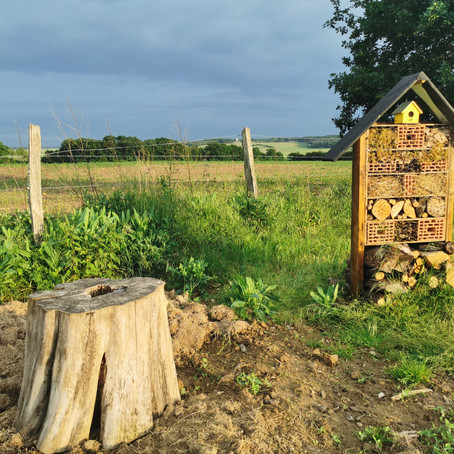 This Fall, Build an Eco-Friendly Insect Hotel