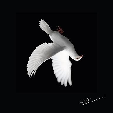 Kuş.jpg