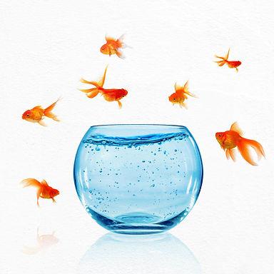 Balık ve Su