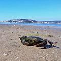 Lagoa de Óbidos / Obidos Lagoon / Laguna de Óbidos / Lagune d'Óbidos © The Sapphire www.the-sapphire.com