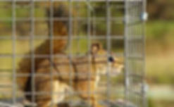 squirrel in a cage 4.jpg
