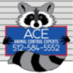 ACE Icon Logo A.png