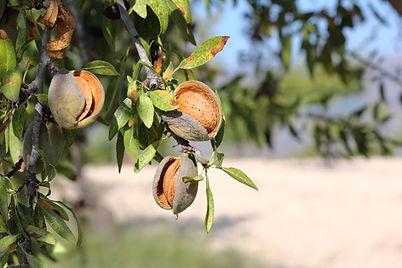 Alimentation ayurvédique au rythme des saisons