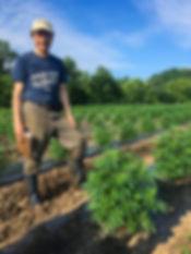 Springdale Farm organic hemp
