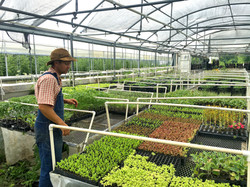 flats of plant starts
