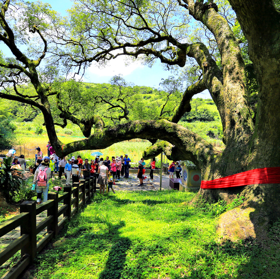 750年老樟樹.jpg