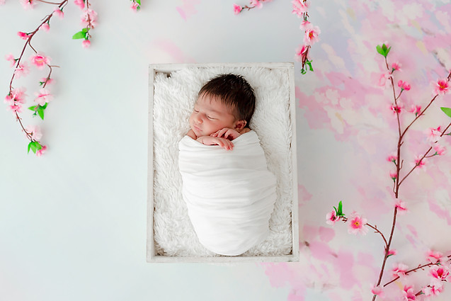 Newborn cherry Blossom Photo session