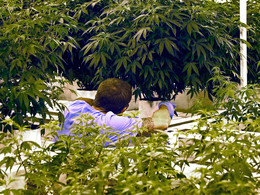 Onerous State Regs Cause Two MN Dispensaries to Lose $11M